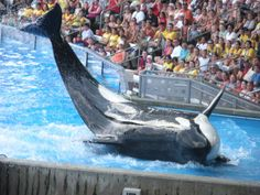 Book a vacation rental in Orlando and see Shamu doing his wild tricks at SeaWorld!
