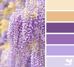 Wisteria colour palette shades of purple and soft orange from Design Seeds Purple Color Palettes, Colour Pallette, Purple Palette, Color Balance, Color Harmony, Design Seeds, Paint Color Combos, Paint Colors, Color Combinations