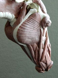 "Sarah O'Connell: Sculptures. ""Horse Skeleton with added Muscles; Ongoing project"""