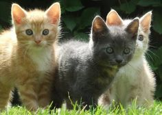 Today is National Cat Day - Shelters across Long Island tend to fill up, especially as the temperatures begin to drop, so why not go out and adopt a furry friend for the holiday? Although June is National Adopt-A-Cat Month, there's never a bad time to save a life and bring home a pet.