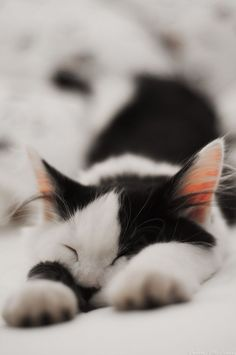 I'm just pretending to sleep!