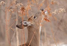 ce3f6c08e1a1b 475 Best Hunting images in 2019 | Hunting, Archery Hunting, Bowhunting