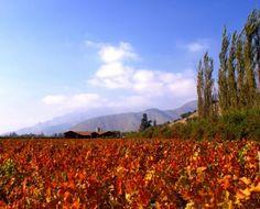 A maior pontuação por Robert Parker na história do vinho do Chile http://winechef.com.br/a-maior-pontuacao-por-robert-parker-na-historia-do-vinho-do-chile/ A maior nota de Robert Parker para um vinho chileno