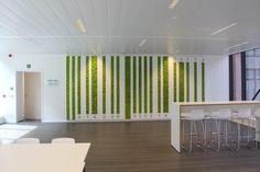 """Any Green heeft in de categorie """"Green Walls – Artificial Foliage"""" de eerste… Shop Interiors, Office Interiors, Moss Graffiti, Garden Wall Designs, Moss Wall Art, Green Office, Dentists, Panel Art, Green Walls"""