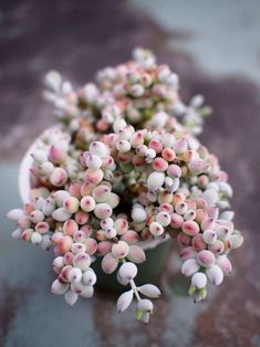 Houseplants That Filter the Air We Breathe Silvia Patricia Balaguer Succulent Gardening, Cacti And Succulents, Planting Succulents, Planting Flowers, Organic Gardening, Cool Plants, Air Plants, Garden Plants, Indoor Plants
