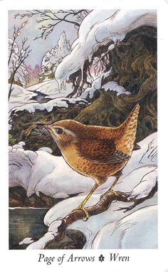 Wren from the Wildwood Tarot
