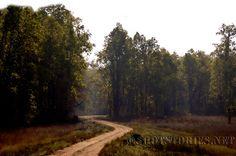 A perfect Jungle Hideout http://www.shotstories.net/2013/01/touching-woods.html