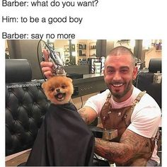 3b2aeeff798143718940a035dd7747c9 cute love memes funny dogs the 94 best dank memes images on pinterest donald o'connor, tiny