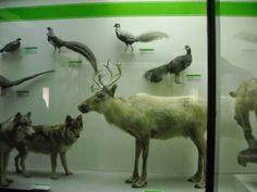 Daniela Scarel Art: Museo Civico di Storia Naturale (Milano) Part.IV