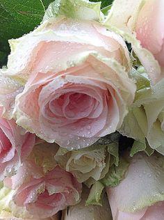 37 Ideas for flowers beautiful rose romantic Amazing Flowers, Beautiful Roses, Beautiful Flowers, Romantic Flowers, Purple Roses, Pink Flowers, Love Rose, Rose Cottage, Ikebana