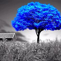 Inspiring image color splash, colorsplash, photography, blue tree by Lauralai - Resolution - Find the image to your taste Splash Photography, Color Photography, Black And White Photography, Tree Photography, Pinterest Photography, Color Splash, Color Pop, Color Blue, Black And White Pictures