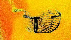 OoOOoOO New View, Moth, Insects, Animals, Image, Style, Animales, Animaux, Animal