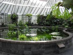 tilapia pond in greenhouse - Google Search