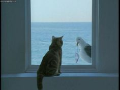 Hi There - Daily Funny Cat Pictures from funnycatsite.com