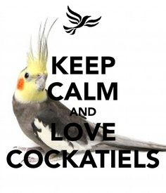 'KEEP CALM AND LOVE COCKATIELS' Poster