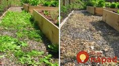10 Ways To Outsmart Weeds Without All Those Toxic Chemicals Desert Colors, Garden Care, Vegetable Garden, Stepping Stones, Weed, Outdoor Structures, Gardening, Outdoor Decor, Flowers