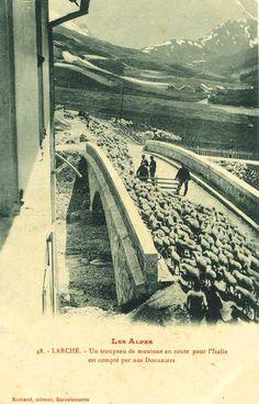"""Cartolina. """"Les Alpes. Larche. Un gregge di pecore in direzione dell'Italia conteggiato dai doganieri"""". Richard Editeur, Barcelonnette, 1907."""