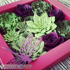 - Tamsininamania -: Oh So Succulents