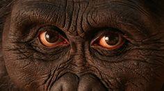 Your distant cousin, Australopithecus. #seriouslyamazing