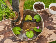 Here's how to create a simple pond in a pot so you can enjoy water lilies on a sunny deck or patio.