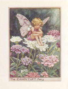 Las hadas de la flor: La CANDYTUFT FAIRY Vintage Print c1930