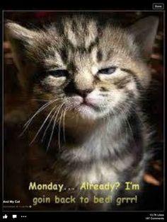 Good idea Kitty!