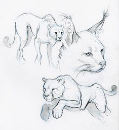 Easy but arrrrrghhhhhhhh animal sketches easy, animal drawings, cool drawin Animal Sketches Easy, Pencil Drawings Of Animals, Sketches Of Animals, Cat Drawing, Drawing Sketches, Drawing Ideas, Drawing Lessons, Sketch Ideas, Nature Sketch