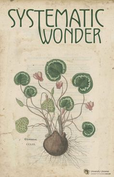 Systematic Wonder poster with print of a plant