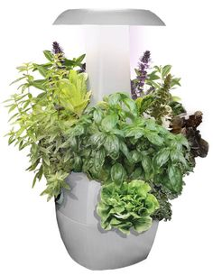 A Smart Hydroponics system that takes care of your plants from home! A Smart Hydro Home Hydroponics, Aquaponics Kit, Hydroponics System, Hydroponic Gardening, Sustainable Gardening, Container Gardening, Organic Herbs, Organic Farming, Marijuana Plants
