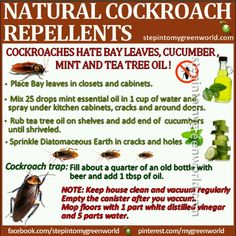 Because everyone deals with at least one roach in their lifetime, especially if they have particle board in their home. Roaches... fill quarter bottle with beer and add one tbsp of oil - makes roach traps