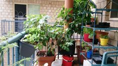 How to Create A Productive Vegetable Balcony Container garden.   Click the image or website link now to listen to Marty's Podcast and read the blog post.  Please also don't forget to re-pin and share on Facebook!