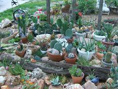 Small Cactus Garden Design best 25 cacti garden ideas on pinterest Smallcontainercactusgardendesign Share Photos Gardeningcactus
