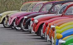 A row of beauties....