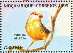 Orange-breasted Waxbill stamps - mainly images - gallery format