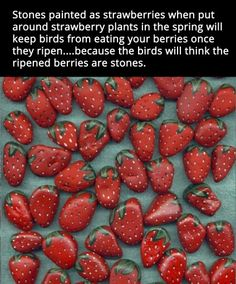Paint stones deter birds from real strawberries