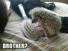 Cute & funny!