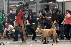 If you're a little disappointed upon learning that the Riot Dog was not just one remarkable pup born with an innate love of tear gas only rivaled by his inherent dislike for The Man, take heart: The other riot dogs -- Thodoris and Loukanikos -- are most likely Kanellos' pups, carrying on his legacy.