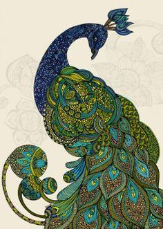 Peacock illustration, drawing