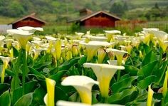 Taiwan - flower farm