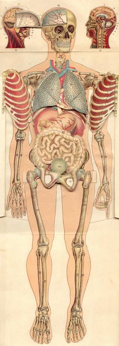 Vintage 1950s Medical Female Anatomy Diagram Fold Out Book Human ...