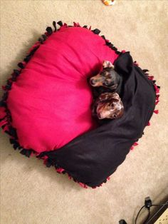 No sew dog bed More
