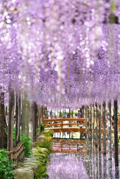 Wisteria, Aichi, Japan #藤 #wisteria Life Is Beautiful, Beautiful Flowers, Beautiful Places, Beautiful Pictures, Aesthetic Japan, Blossom Flower, Flowers Nature, Pictures To Paint, Japanese Culture