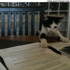 """Ecco questi sono i documenti per l'adozione, devi solo firmare con il tuo cuore sotto la scritta """"per sempre""""..."""