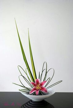 flower arrangement ... Ikebana ... lily with looped leaves and a couple spiked leaves ...