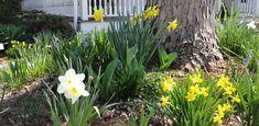 Ten Favorite Flowering Trees, Shrubs, and Plants for Spring Blooms