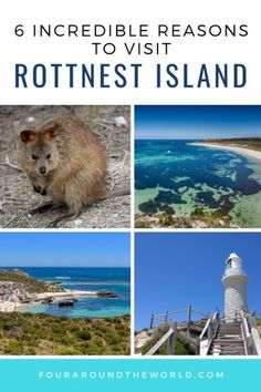 A must visit from Perth - find the top things to do on Rottnest Island, Australia from wildlife encounters to natural scenery. You won't run out of things to do in Rottnest. A perfect family travel destination Tonga, Western Australia, Australia Travel, Queensland Australia, Travel Around The World, Around The Worlds, Water Pictures, Island Tour, Amigurumi
