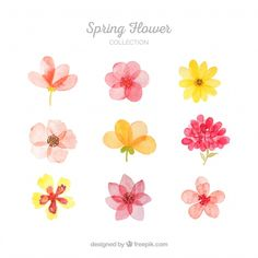 Collection of spring flowers Free Vector – FLOWER Free Watercolor Flowers, Watercolor Border, Easy Watercolor, Watercolour Painting, Floral Watercolor, Art Floral, Motif Floral, Flower Graphic, Floral Flowers