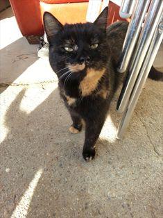 Katze auf dem Bauernhof Mystery, Cats, Animals, Maine Coon Cats, Arts And Crafts, Gatos, Animales, Animaux, Animal