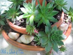 Stones & succulents