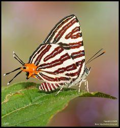 silverline butterfly by darkfoto on 500px